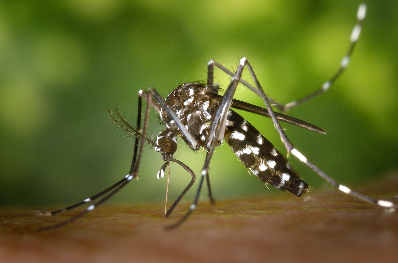 What Makes Malaria Dangerous?